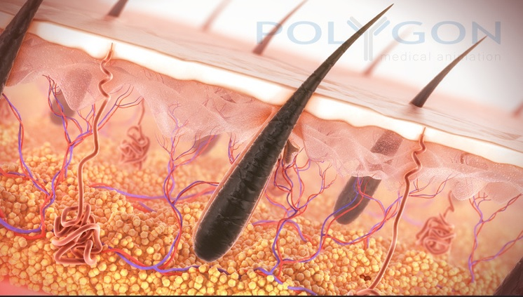 Hair Follicles Are Delicate Structures | Hair Transplant Methods